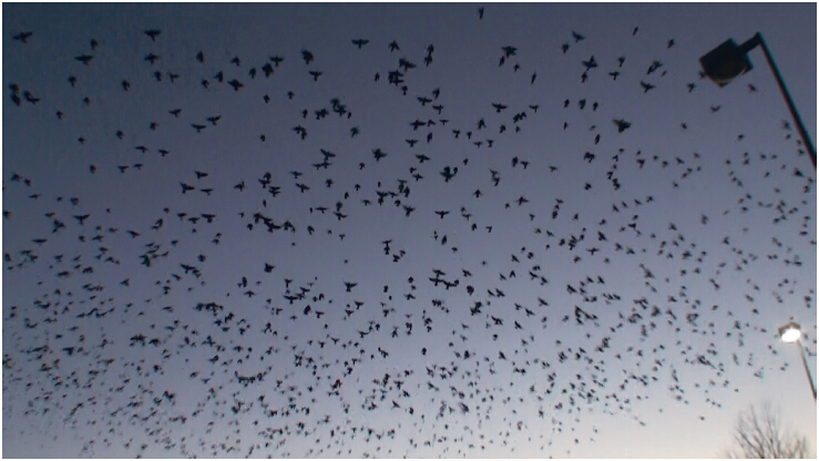 《揭开真相》(二十六)提前预言百万飞鸟到 第3张